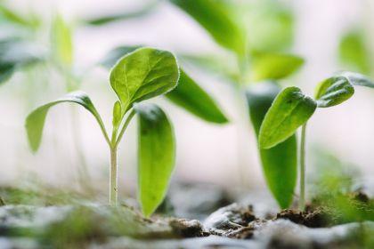 Fachübersetzungen für die Umwelt und Energiewirtschaft